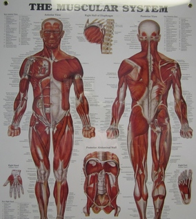Chiropractic Care and the Workout